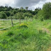 Girl Scouts wetland and stream delineation 2