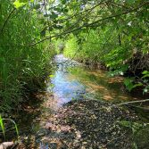Girl Scouts wetland and stream delineation 3